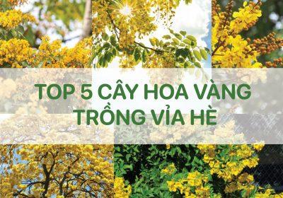 TOP 5 Cây Hoa Vàng trồng nhiều tại Vỉa Hè đô thị Việt Nam 2021